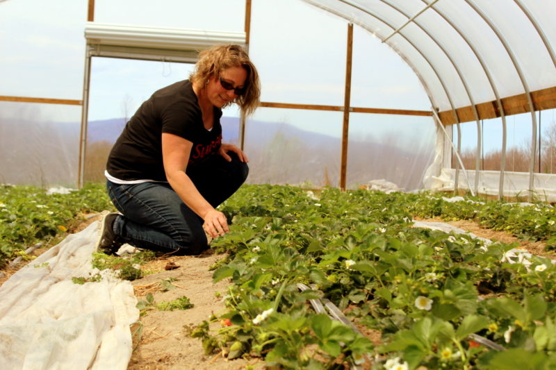Innovation is allowing W.Va. farmers to grow year round.