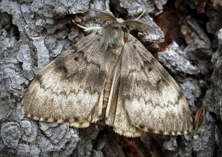 State urges landowners to sign-up for moth suppression program