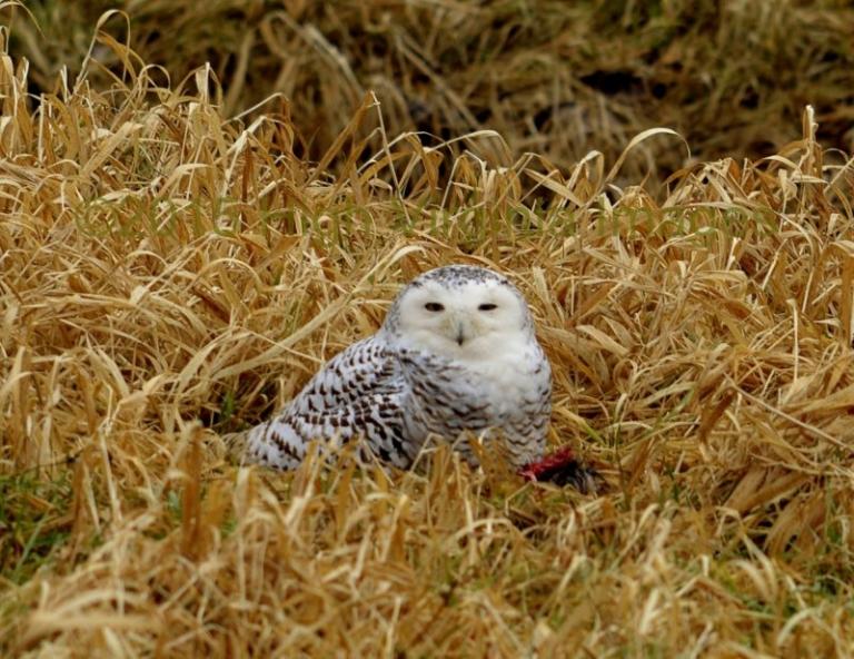 Remarkable avian guests visit West Virginia in winter