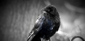 """Might Edgar Allen Poe's """"The Raven"""" have been penned while the author was visiting West Virginia?"""