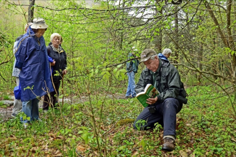 Hundreds attend May wildflower weekend at Blackwater Falls