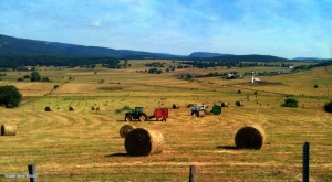 Farmers harvest a summer hay in the valley of the South Branch of the Potomac. Photo courtesy Yvonne Wilcox.