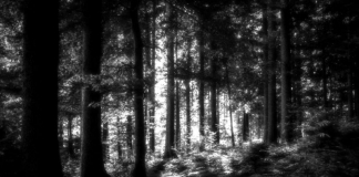 Forest near Grafton, West Virginia, out of which the Grafton Monster allegedly appeared.