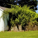 Mounded root cellars accompany most residences in Arthurdale.