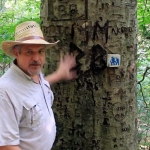 David Sibray examines a carved beech during a hike on the Alice Knight Memorial Trail.