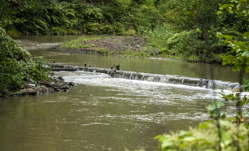 A splash dam crosses the upper Guyandotte River near its source at Amigo. Photo courtesy Tara Chavez of http://peepingdragonphotography.com/.