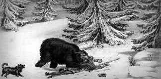 """""""The bear suddenly came down on the hunter's chest and as he did so, Bill caught him by the scruff of the neck and hacked with his knife until he was able to pierce the animal's brain."""""""