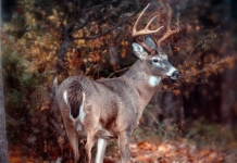 Deer hunting is an increasingly popular sport in West Virginia.