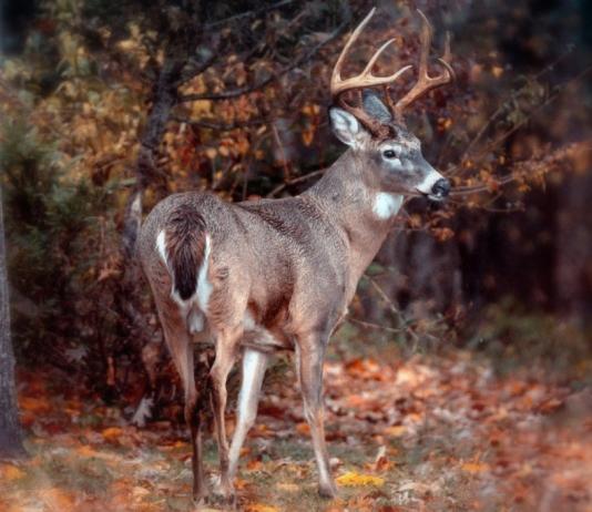 Deer hunting is an increasingly popular sport in West Virginia.