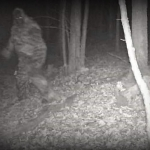Bigfoot allegedly caught on hunter's cam in Fayette County, West Virginia. Source undetermined.