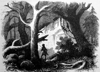 A hunter roams the West Virginia forest Illustration c. 1861 from Harper's New Monthly Magazine by Porte Crayon (David Hunter Strother).
