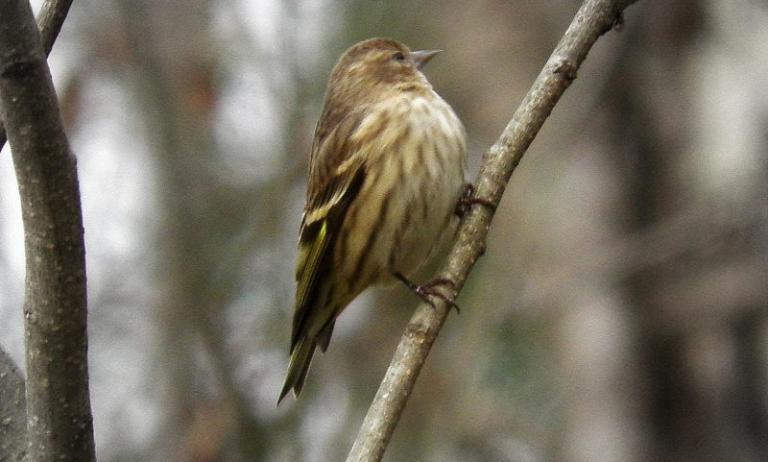 Chief Logan park introduces spring birdwatching program