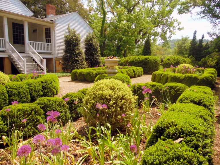 USDA detects boxwood blight in West Virginia gardens