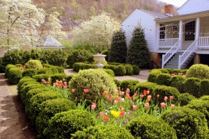 Tulips blossom in the period Craik-Patton gardens.