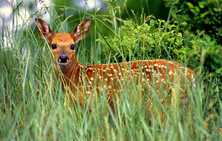 Biologist: young wild animals in spring are best left alone