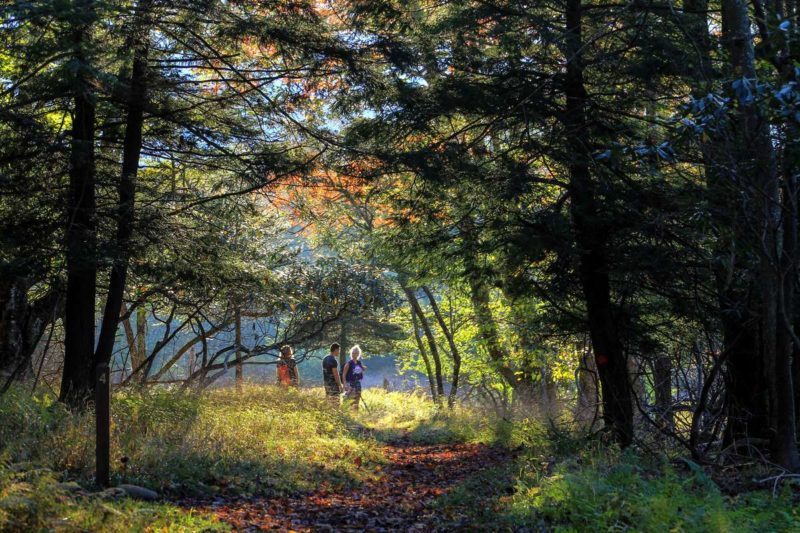 Hikers wander among hemlock at Canaan Valley Resort State Park in Tucker County, West Virginia.