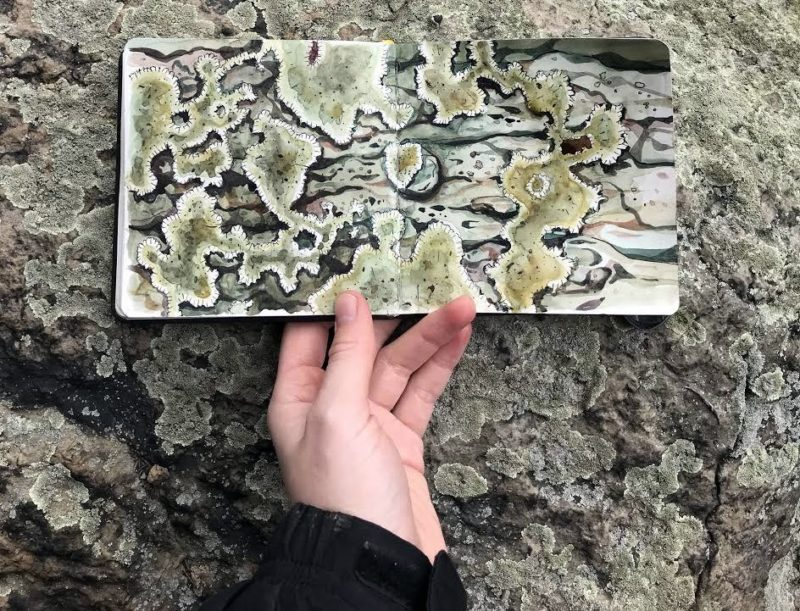 Lichens appear abstract in a watercolor study by Rosalie Haizlett.