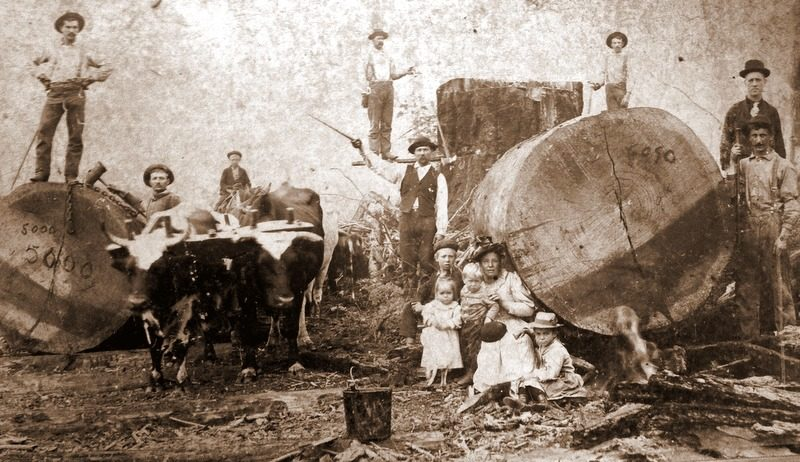 A family of loggers poses with their beasts of burden alongside logs timbered in the mountains of southern West Virginia.