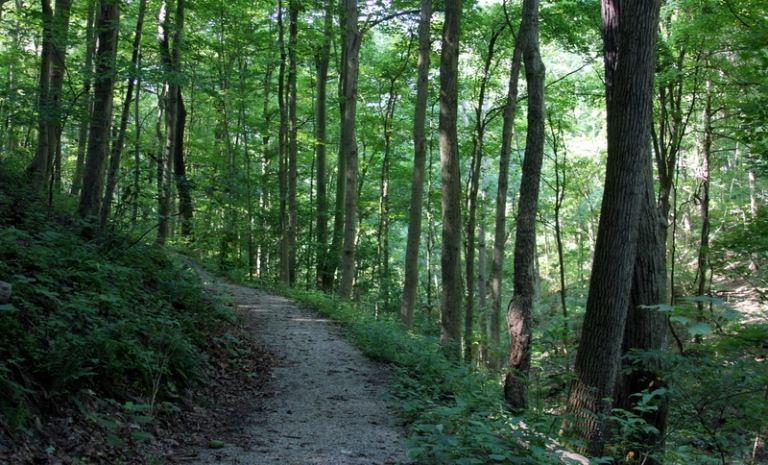 Bethany College seeks volunteers for trail system clean-up