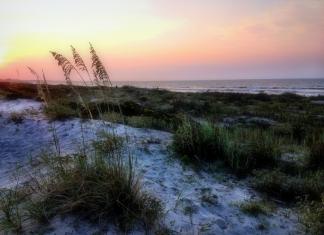 Sea oats bend in the wind along the U.S. coastline.