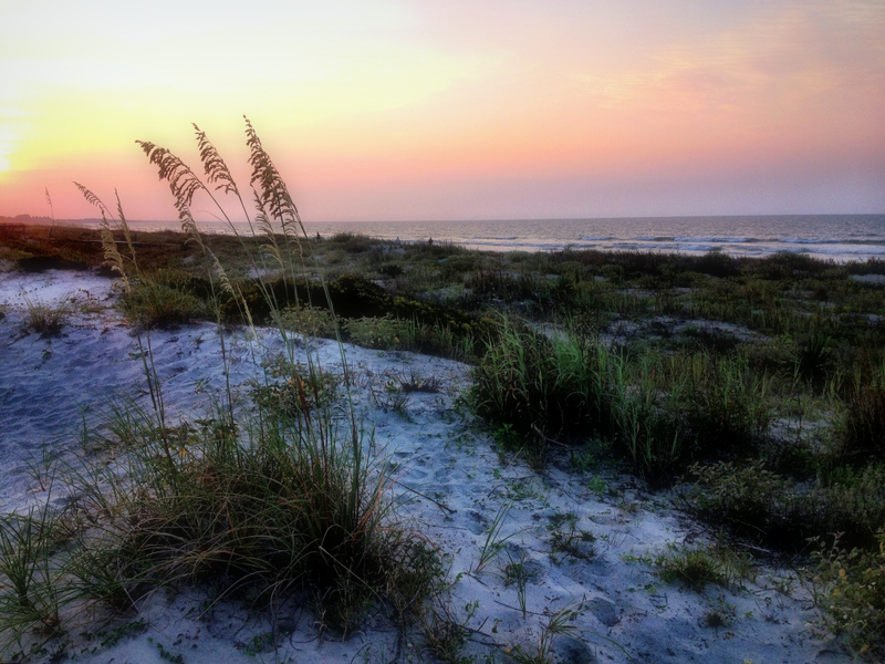 Sea oats bend in the wind along the U.S. coastline.