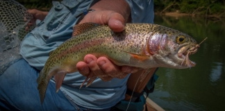 An angler in West Virginia shows off his catch, a rainbow trout.