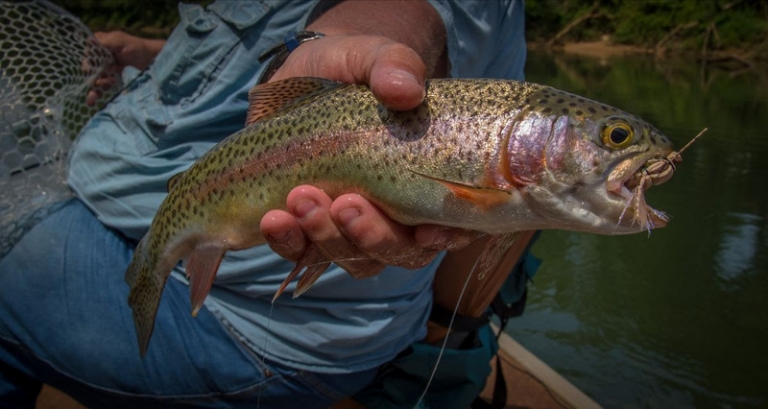 Statewide meetings will discuss trout management