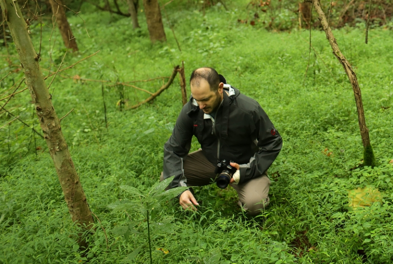 WVU prof to study plant invading the Appalachian forest