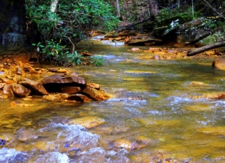 An acidic stream in West Virginia is revealed by yellow-tinged rocks.