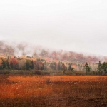 Fog shrouds Black Mountain at Cranberry Glades in Pocahontas County