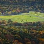 A pasture opens in the Germany Valley woodland in Pendleton County.