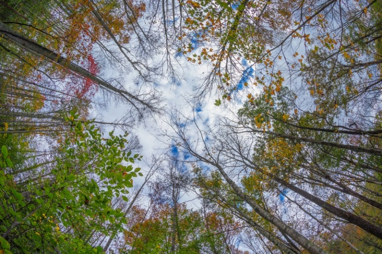 Gallery: Autumn in West Virginia by Jesse Thornton
