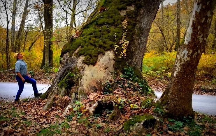 David Sibray considers the mossy trunk of the largest tree in West Virginia. (Photo: Alfred Clark)