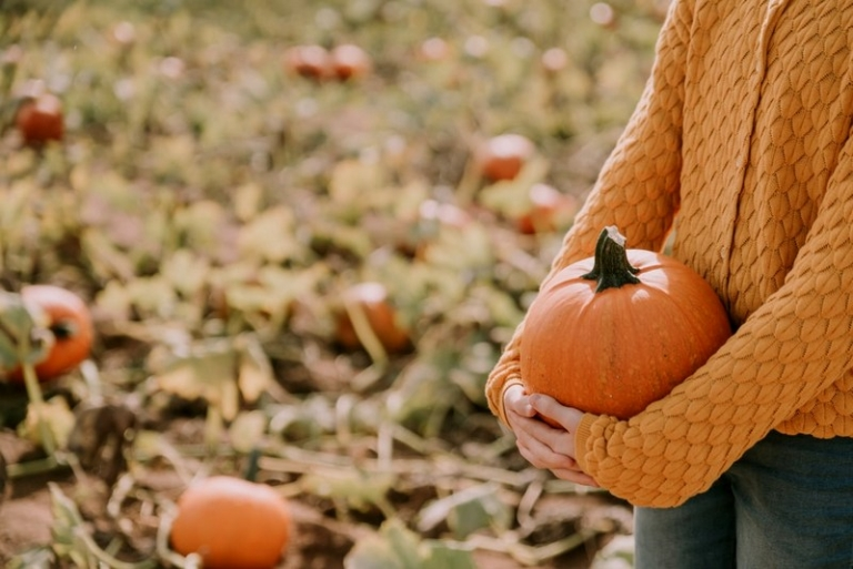 The Pumpkin—West Virginia tradition steeped in lore