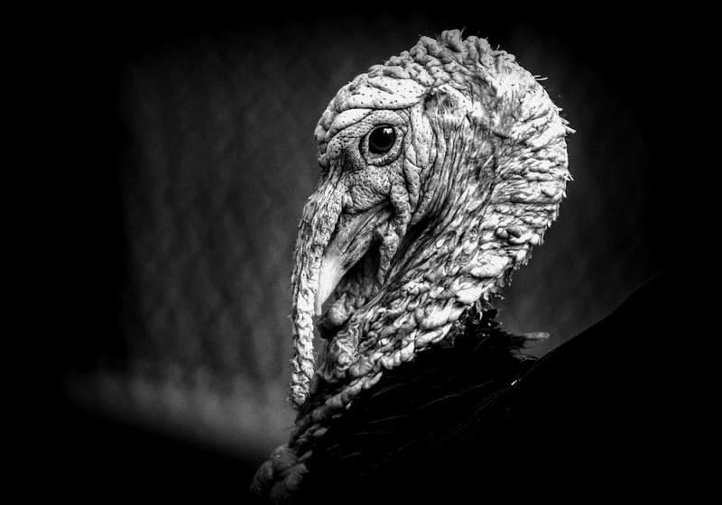 A witch or a turkey? Some old-timers in West Virginia believed it could be either.