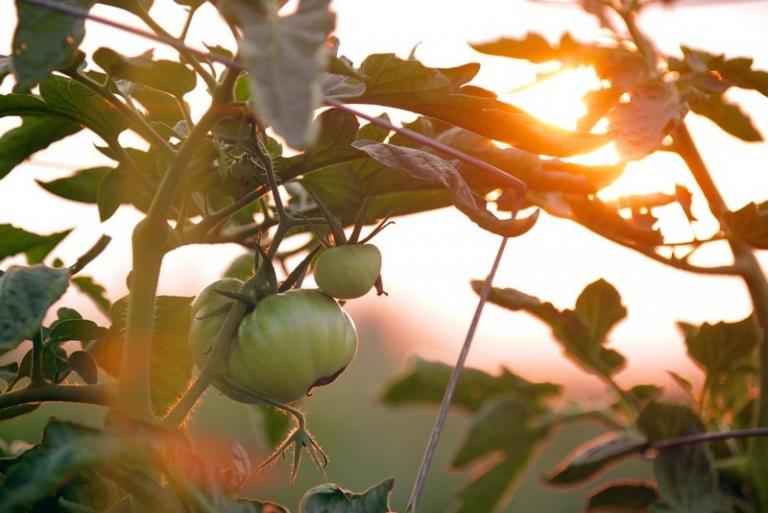 West Virginia receives $250,000 in specialty crop grants