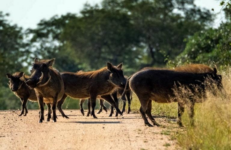 Wild boar season opens in southern West Virginia