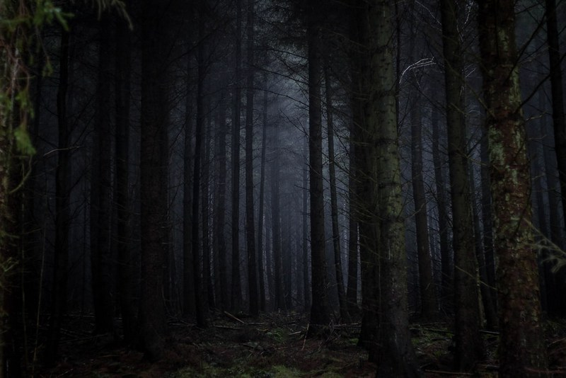 An evergreen forest in West Virginia.