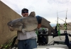 Justin Conner of Culloden caught a 49.84-inch, 58.38-pound blue catfish on the Ohio River in Mason County.