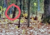 Does this cell-phone photo show a bigfoot in the woods near Danese, West Virginia, east of the New River Gorge?