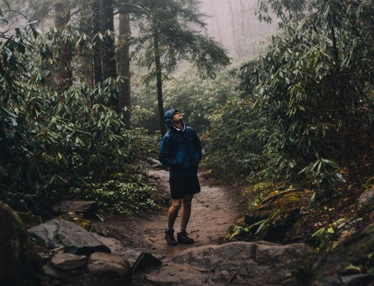 Glenville, U.S. Forest Service to offer forestry internships