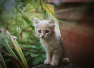 A kitten peers out from behind a flowerpot in West Virginia. (Photo courtesy Sindy Strife)