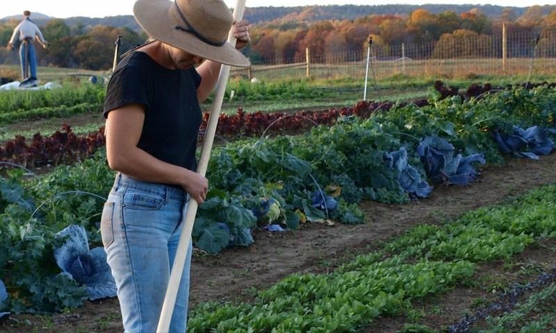 Farm manager Susanna Wheeler tends a garden at New Roots Community Farm near Fayetteville, West Virginia.