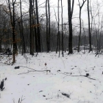 The clearing as it appears on a snowy February day five months after the sighting. (Photo courtesy Billy Humphrey)