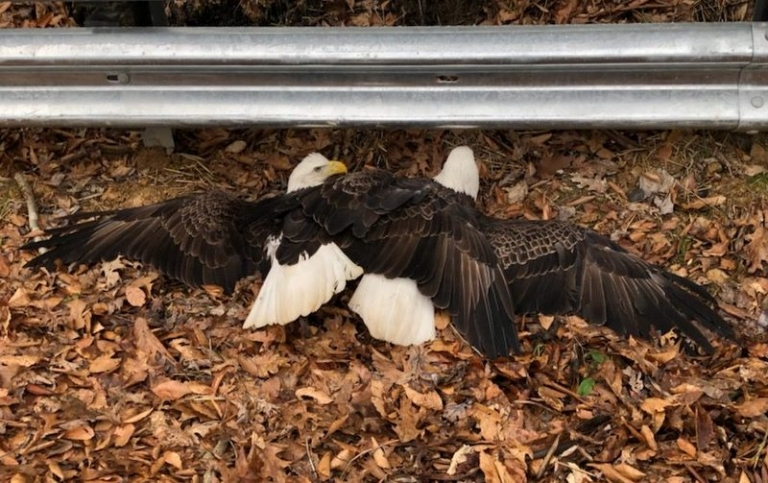 Motorists encounter rare sight in southern West Virginia