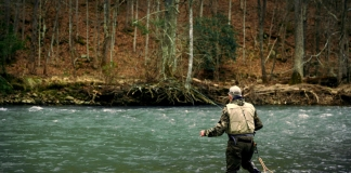 A fly fisherman wades into a stream in West Virginia.
