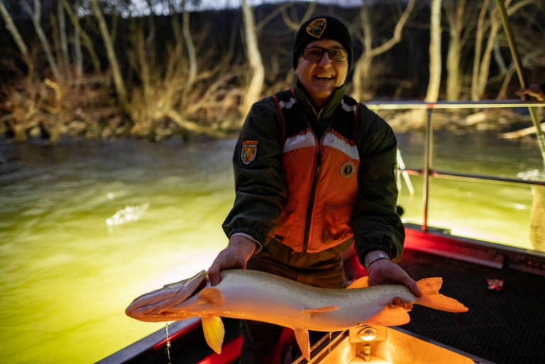 Biologists use electrofishing technique to study New River walleye