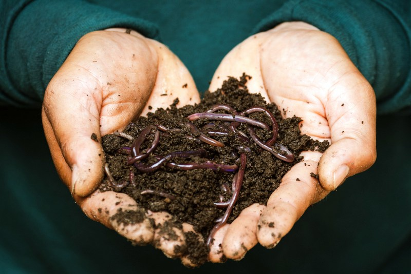 Worms become notably active in the upper layer of the soil in March.