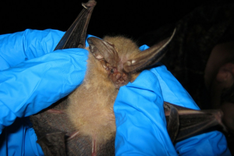 What have bats to do with the coronavirus outbreak?