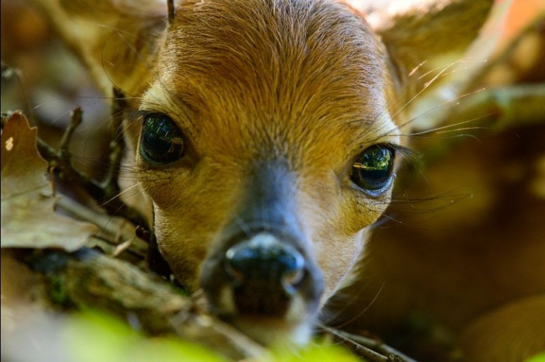 Young wildlife should be left alone, say state biologists